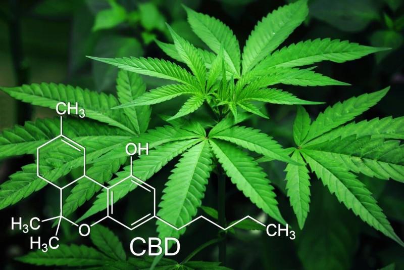 Lecznicza marihuana – fakty i mity